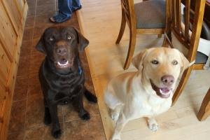 Meet Emmet (brown) and Jasper (yellow)